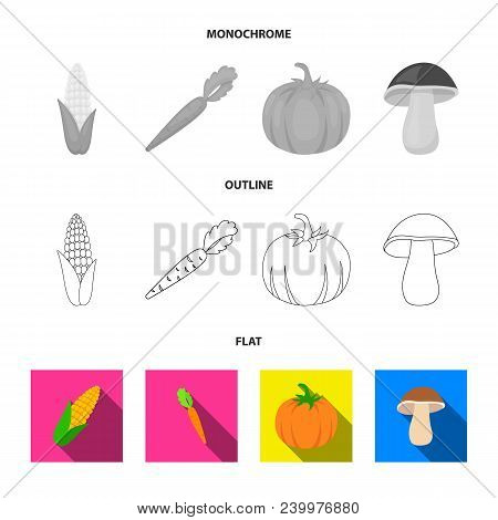 Corn Corn, Vitamin Carrots With Tops, Pumpkin, Forest Mushroom. Vegetables Set Collection Icons In F