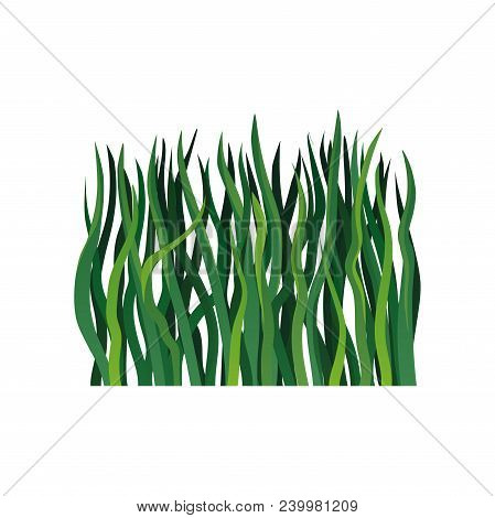 Colorful Illustration Of Long Green Grass. Element Of Spring Or Summer Season. Nature And Gardening