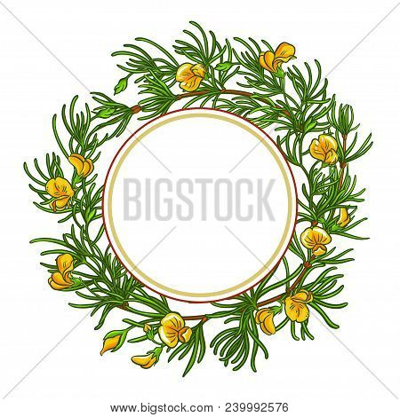 Rooibos Branch Vector Frame On White Backgrond