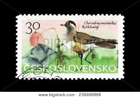 Czechoslovakia - Circa 1965 : Cancelled Postage Stamp Printed By Czechoslovakia, That Shows Eurasian
