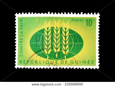 Guinea - Circa 1963 : Cancelled Postage Stamp Printed By Guinea, That Shows Wheat Emblem And Globe.