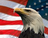 double exposure:  bald eagle in the foreground with the american flag blurred in the background. poster