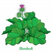 Vector bush of outline Burdock or Arctium lappa, leaf and bur or seed in green isolated on white background. Medicinal, cosmetic, edible herb Burdock in contour for summer design. poster
