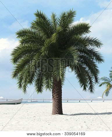 Palm Tree On The Sea Shore In Sand