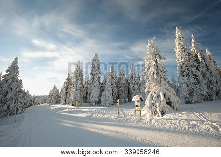 Spruce trees mountain winter path road trail Nature background Nature landscape Nature background winter pine trees sunrise sun sunset Nature background Natural Nature background Travel tourism Nature background frozen frost snow lane Nature background.