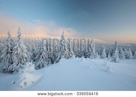 Winter landscape spruce trees mountain scene dawn panorama Nature background Nature background winter pine trees Nature background sunrise sun sunset Nature background Nature background travel tourism Nature background frost snow Nature background.