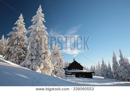 Spruce trees mountain winter scenery dawn Nature background Nature landscape Nature background winter pine trees sunrise sun sunset Nature background Natural Nature background Travel tourism Nature background frozen frost snow blue sky Nature background.