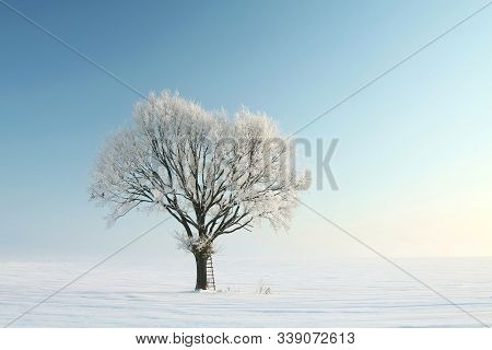 Winter trees field dawn sunrise Nature background Nature landscape scenery natural scenic Nature background snow morning frost sunny sun Nature background frosty snowy frozen tree branch Nature background blue sky Nature background Nature background.