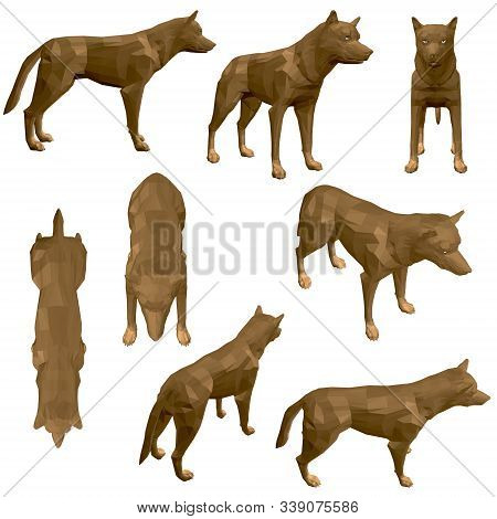 Set With Polygonal Coyote. Brown Coyote With Different View. 3d. Vector Illustration