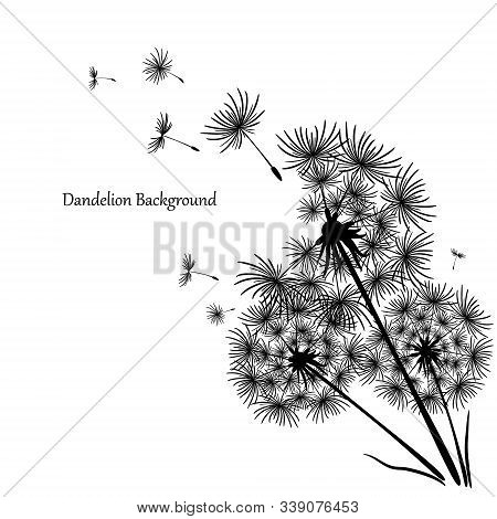 Beautiful Icon With Black Dandelion On White Background For Concept Design. Spring Floral Background