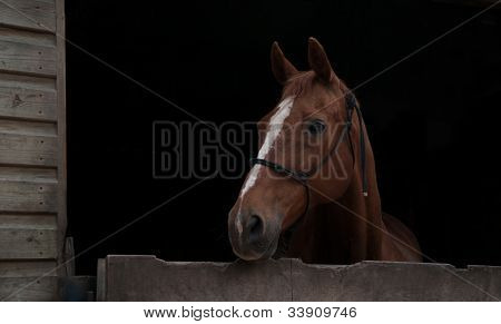 Stabled