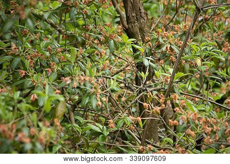 A Single Humming Bird Perched On A Branch