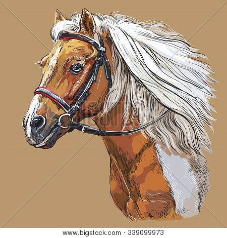 Colorful Horse Portrait With Bridle. Horse Head With Long Mane In Profile Isolated On Beige Backgrou