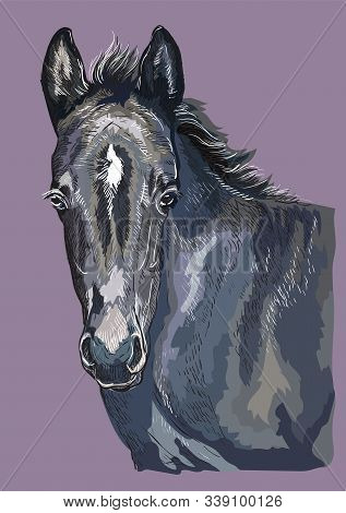 Colorful Cute Pony Foal Portrait. Young Pony Head Isolated On Purple Background. Vector Hand Drawing