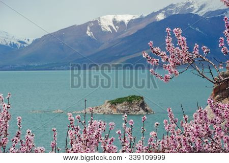 Amazing Spring View From Akdamar Island Surrounded By Blossoming Trees, Lake Van, Turkey. Focus On P