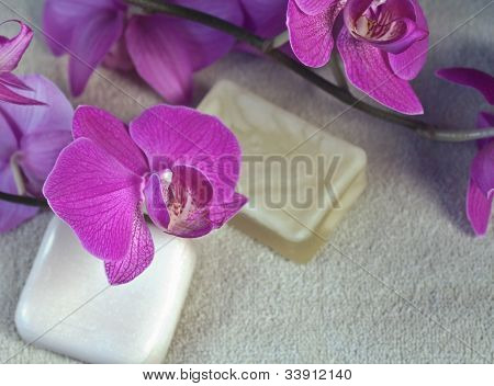 Orchids At The Spa