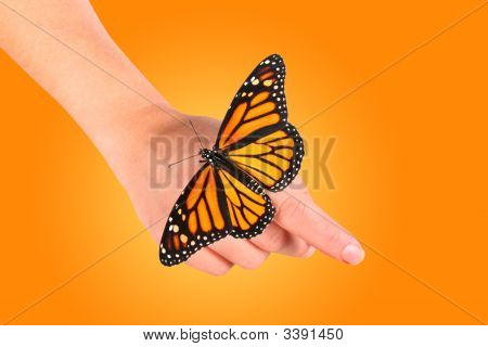 Monarch Butterfly Resting On Womans Hand