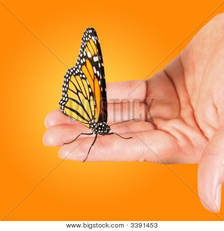 Monarch Butterfly Resting In The Palm Of A Womans Hand
