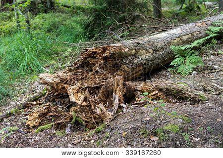 Rotten Tree On The Ground