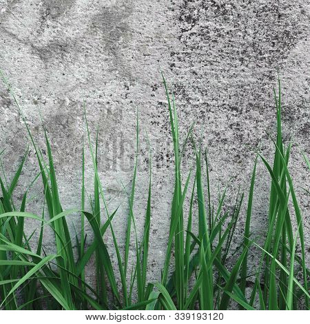 Dark Grey Coarse Concrete Stone Wall Texture, Green Grass, Horizontal Macro Closeup Old Aged Weather