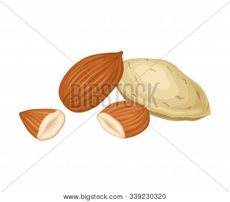 Whole Almond Nut And Half Split Isolated On White Background Vector Item