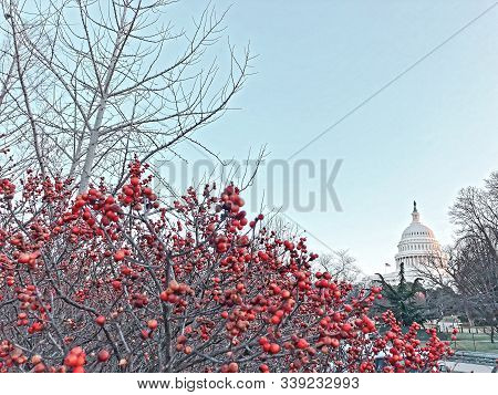 Christmas On Capitol Hill Festive