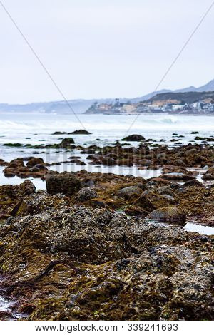 Intertidal Rocks In Tidal Pools With Molusks, Seagrass, And Seaweed