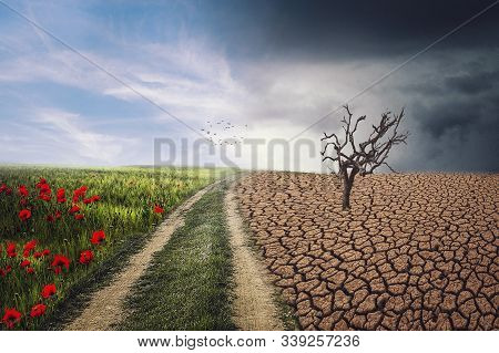 The Adverse Impact Of Climate Change On The Nature Of The Landscape And Ecosystems.