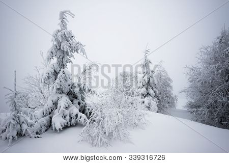 Small Fragile Tree Covered With Hoarfrost