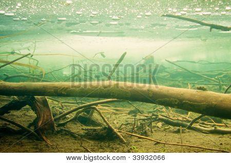 Sunken wood under the ice in frozen beaver pond