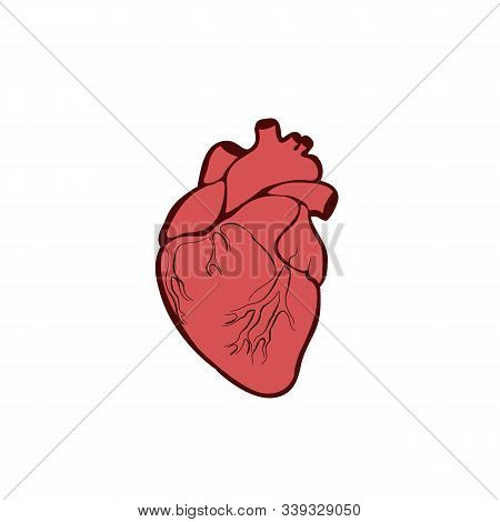 Anatomical Heart Isolated. Muscular Organ In Humans. Heart Diagnostic Center Sign. Illustration In F