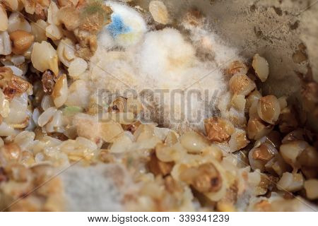 Fluffy Fungi Spores Mold Growing On Buckwheat Porridge In Metal Cooking Pot. Moldy Waste Food In Ref