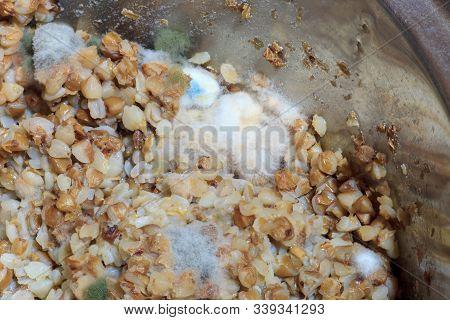 Fluffy Fungi Spores Mold Growing On Buckwheat Porridge In Metal Cooking Pot. Moldy Food In Refrigera
