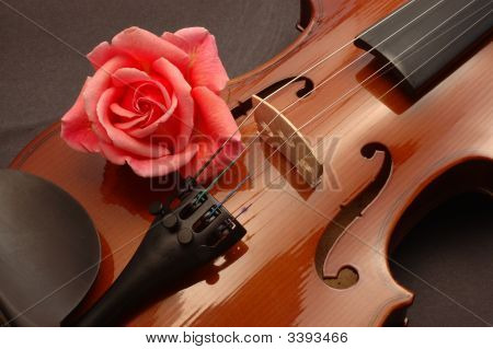 Rose On Violin