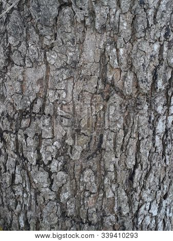 Bark Of Tree Trunk Close-up Texture,stock Photo In Burnpur,west Bengal
