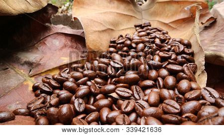 Coffee Beans On Dry Teak Leaves, A Bunch Of Fresh Coffee Beans On Dried Teak Leaves