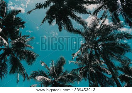 Coconut Palm Trees Against Sky And White Cloud In Tropical Island.