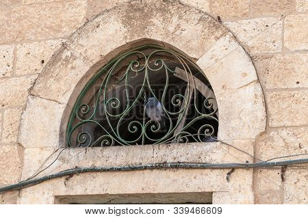 Dove Sits On A Metal Window Grill Of A Mosque Of The Muslim Part Of The Tomb Of The Grave Of The Pro