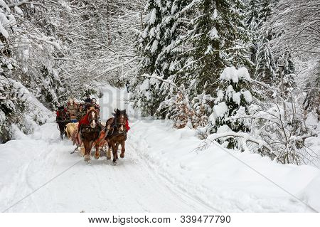 Synevyr National Park, Ukraine - 11 Feb 2018: Winter Holiday Fun. Riding Horses In Open Sleigh Throu
