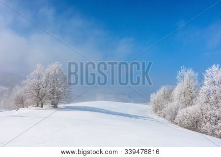 Bunch Of Trees In Hoarfrost On Snow Covered Hill. Sunny Morning Landscape. Misty Weather With Blue S