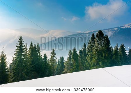 Spruce Forest On A Snow Covered Mountain Meadow. Beautiful Winter Landscape With Distant Ridge. Wond