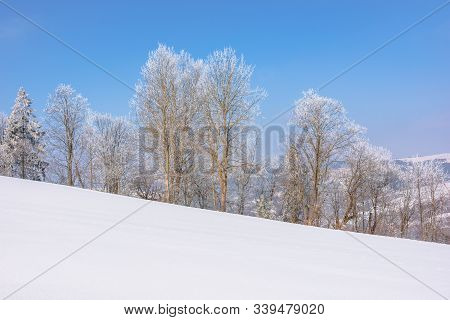 Trees In Hoarfrost On Snow Covered Meadow. Sunny Forenoon Of Mountainous Countryside. Hazy Atmospher