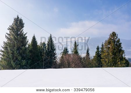 Spruce Forest On The Snow Covered Mountain Meadow. Beautiful Winter Landscape With The Distant Ridge