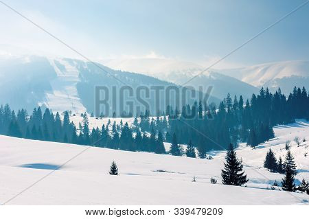 Mountainous Countryside In Wintertime. Stunning Rural Landscape On A Bright Sunny Day. Spruce Forest