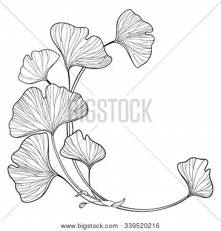 Vector Corner Branch With Outline Gingko Or Ginkgo Biloba Tree. Round Bunch With Ornate Leaf In Blac