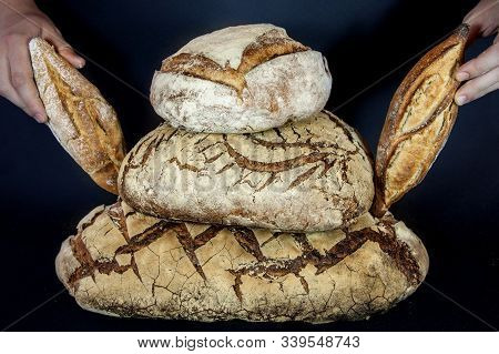 Three Loafs (or miches) of French sourdough, called as well as Pain de campagne, piled and held by hands on a black background. Pain de Campagne is a typical French huge loaf of bread abiding by traditional codes. poster