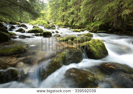 Forest stream Nature background Forest stream river Nature background Forest brook Nature background fall pine spruce trees water creek moss stone Nature background foliage leaves waterfall Nature background Nature background woods Nature background.