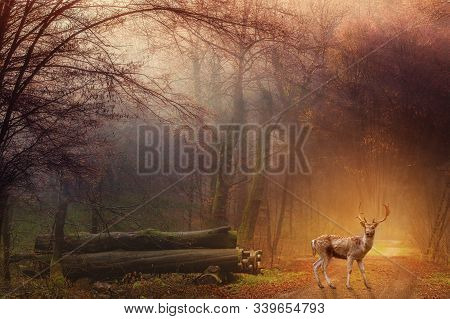 Fallow Deer Standing In A Dreamy Misty Forest, With Beautiful Moody Light In The Middle And Framed B
