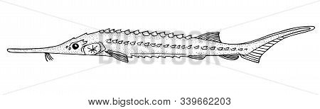 Starry Sturgeon. Black Hand Drawn Realistic Outline Vector Image.