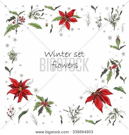 Circle Made Of Elements, Winter Flower Set (mistletoe, Holly, Poinsettia). Realistic Doodling Drawn